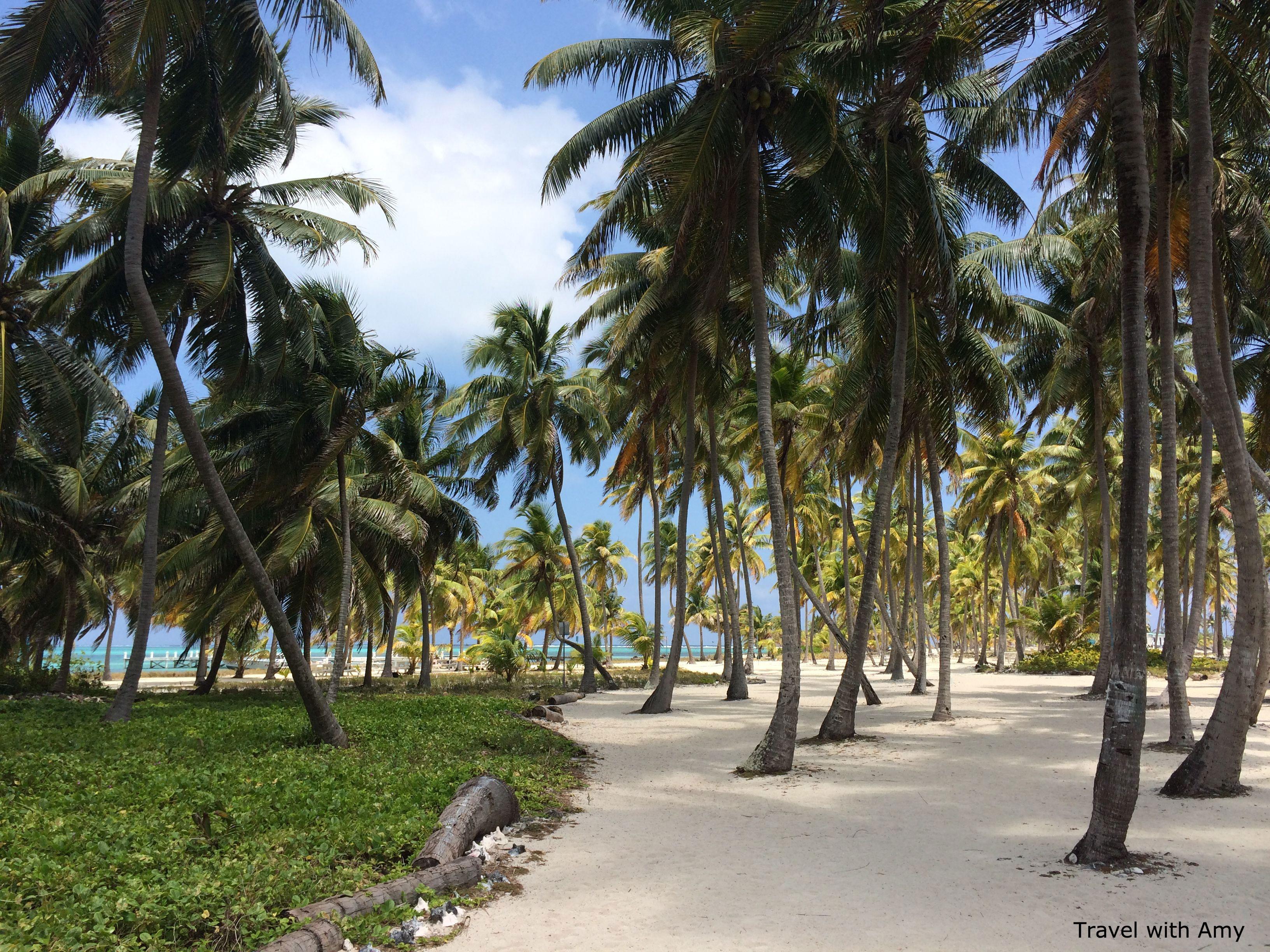 diving coconut island