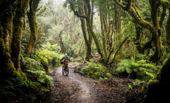 Mountain biking things to do New Zealand North Island