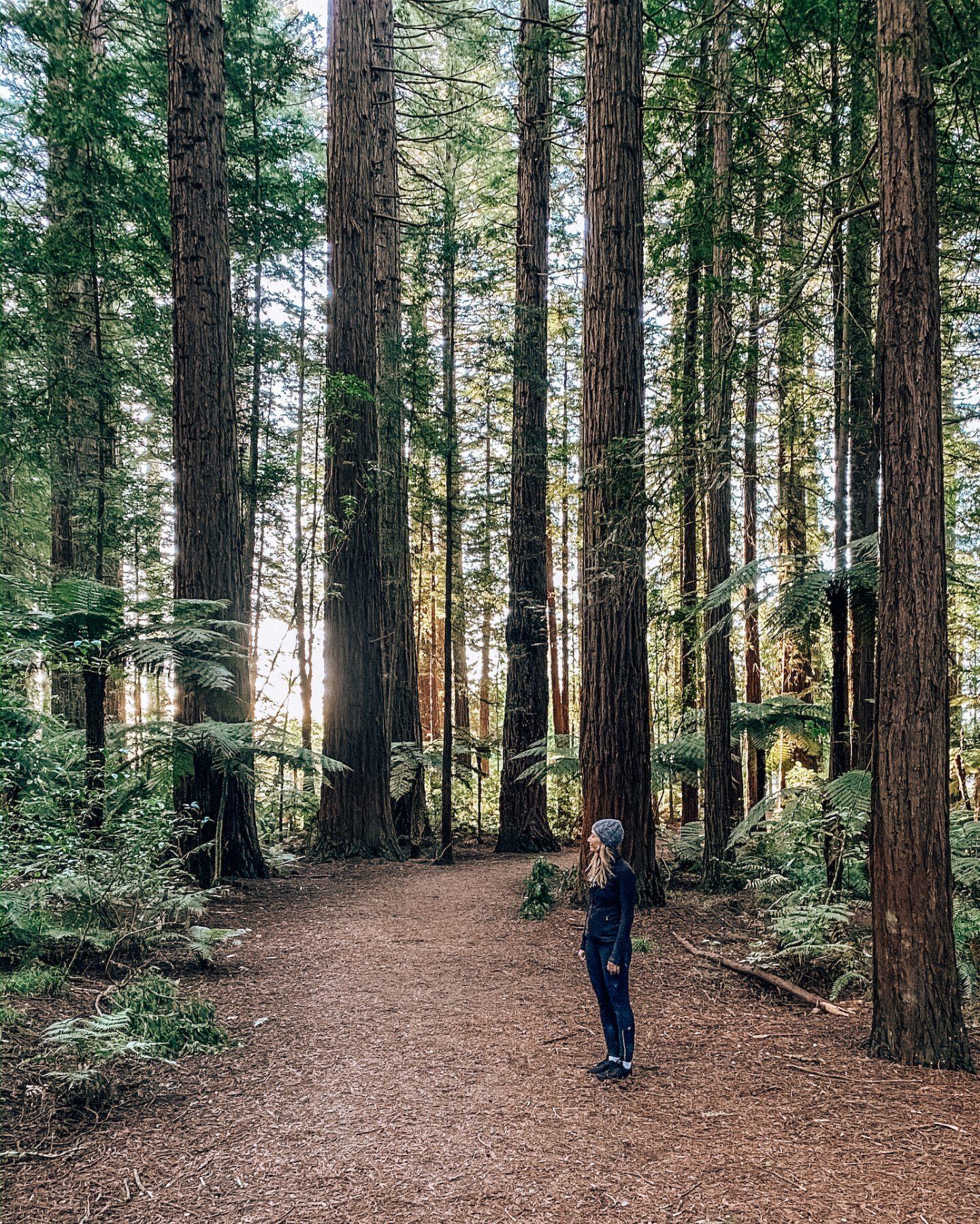 Rotorua Redwood Forest