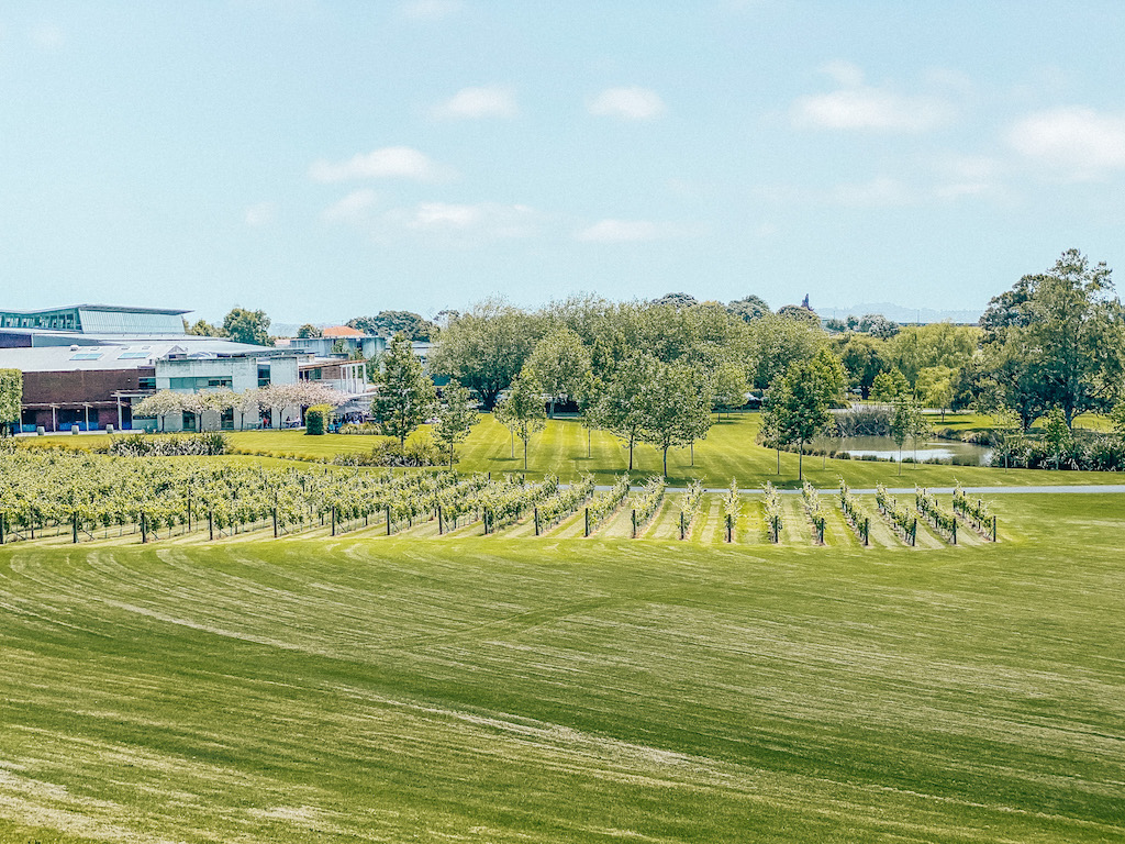 Views over Auckland winery