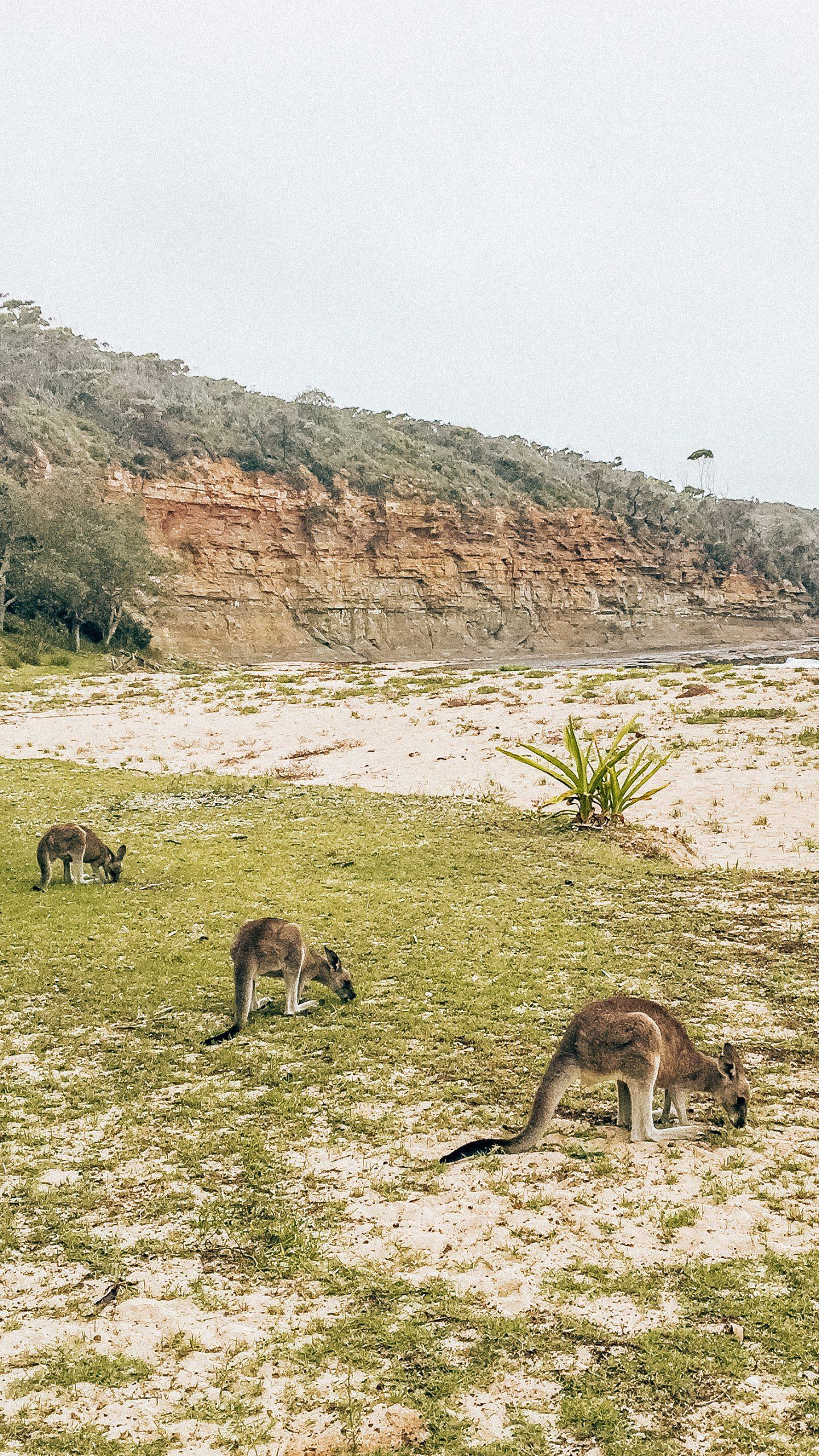 roadtrip NSW South Coast