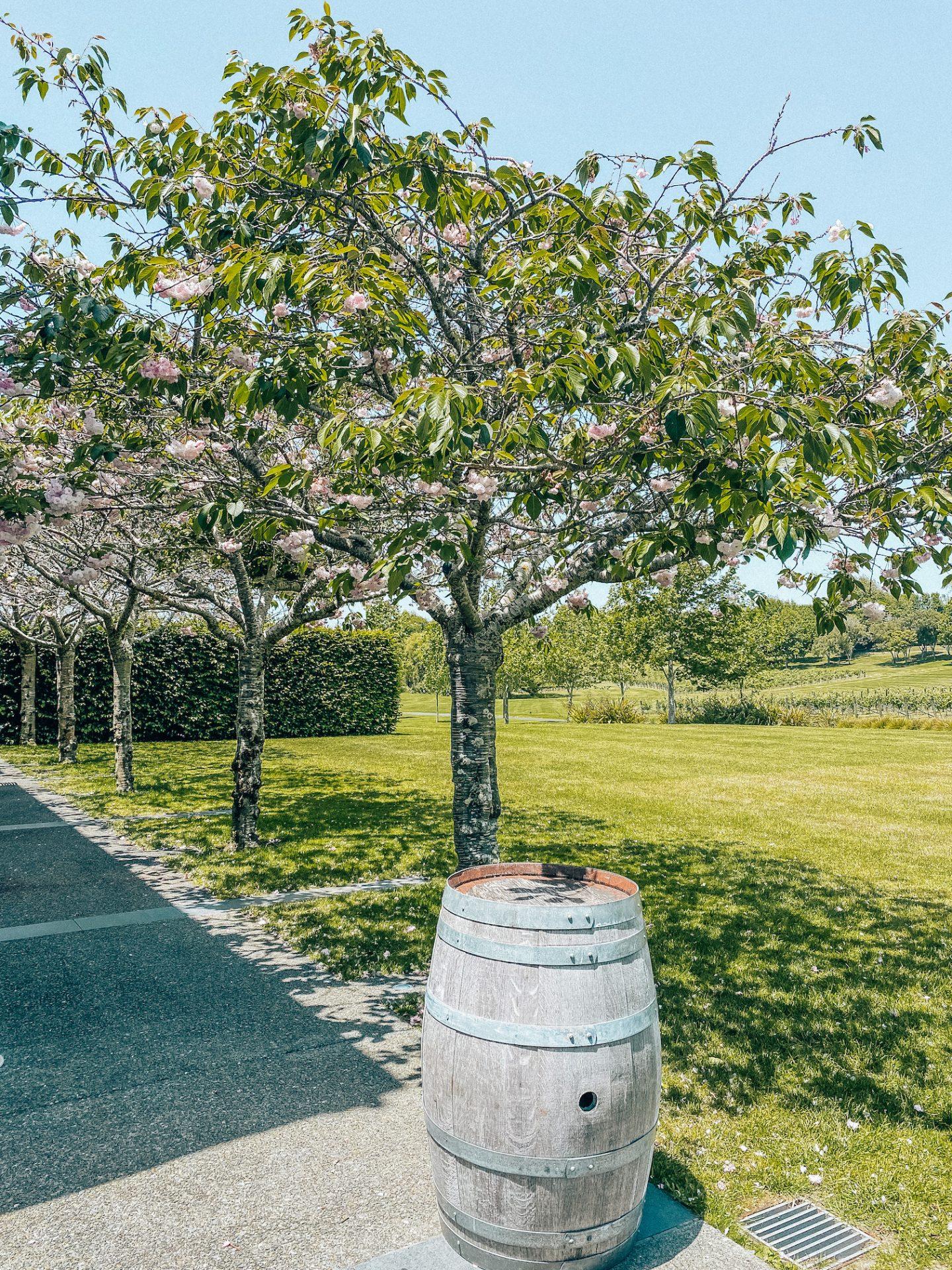 Villa Maria - Auckland winery