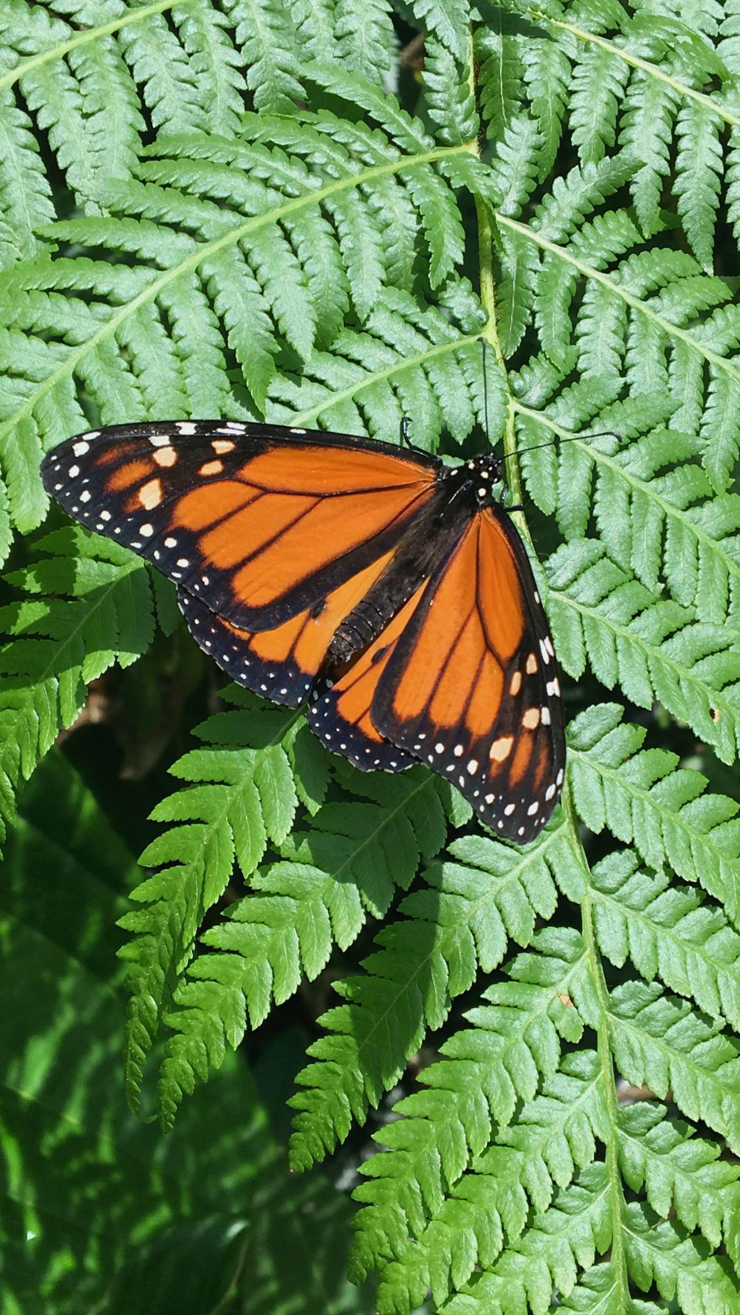 Cairns Botanic Gardens butterfly
