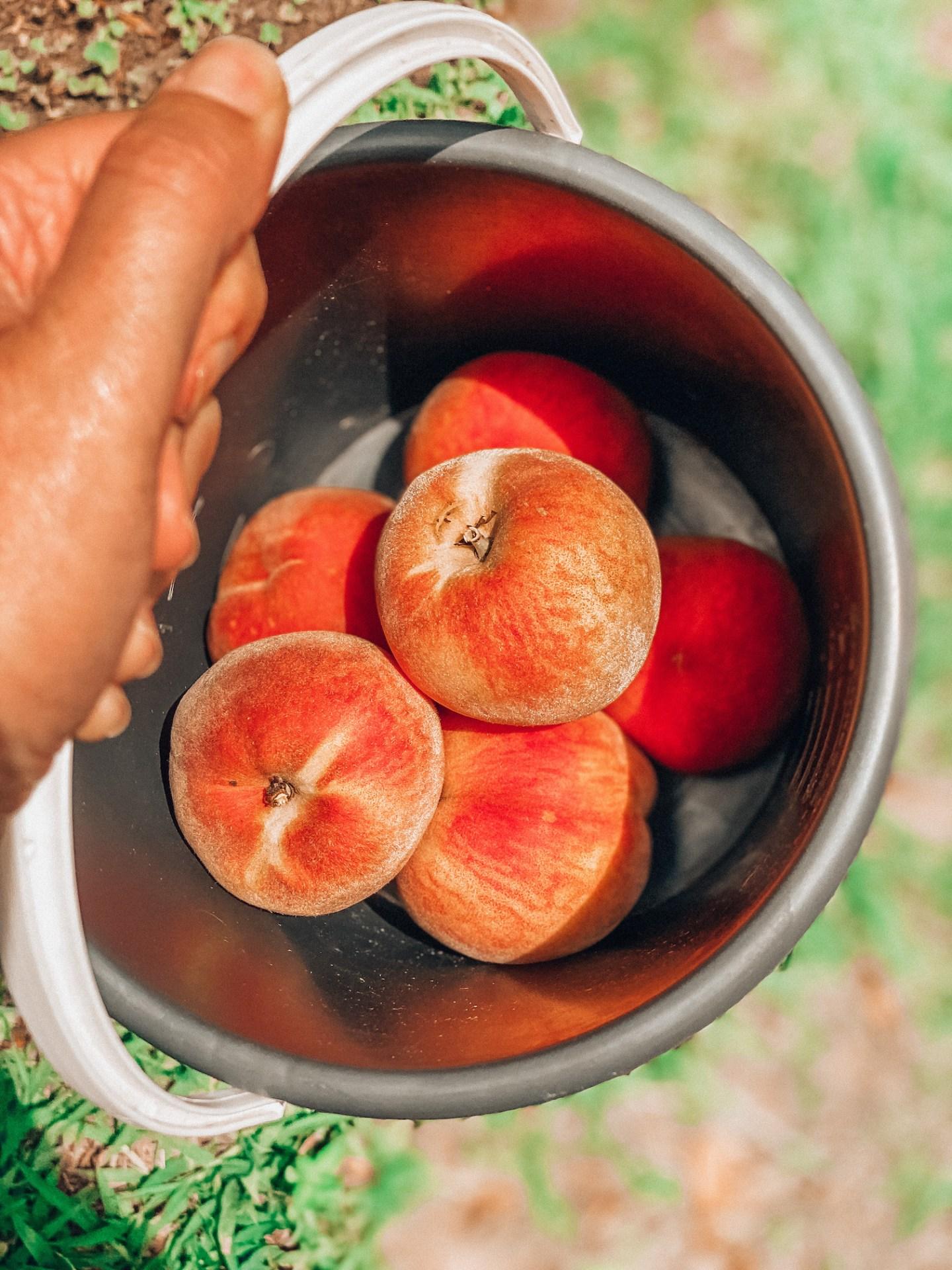Things to do in Yamba, fruit picking